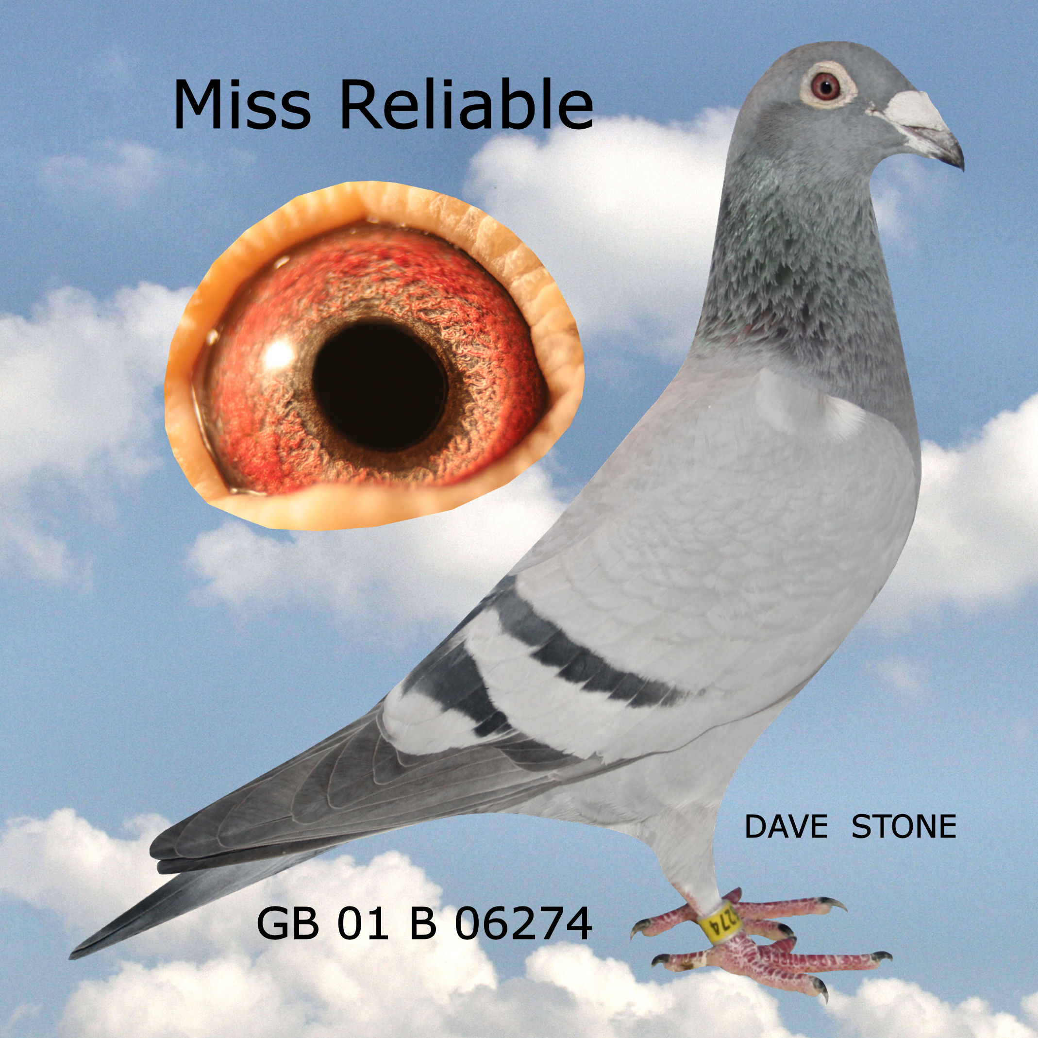 GB01B06274MISSRELIABLE